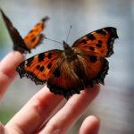 butterflies-hand-1024x585